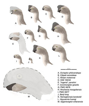 Oviraptorinaeprofiles.jpg