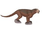 Anomocephalus