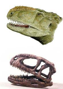 Abelisaurus cabeza.jpg