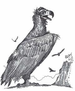 Aegypius prepyrenaicus