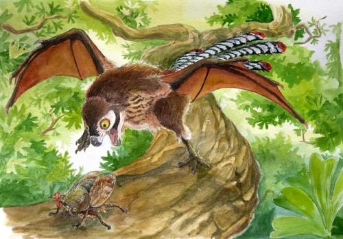 Ambopteryx