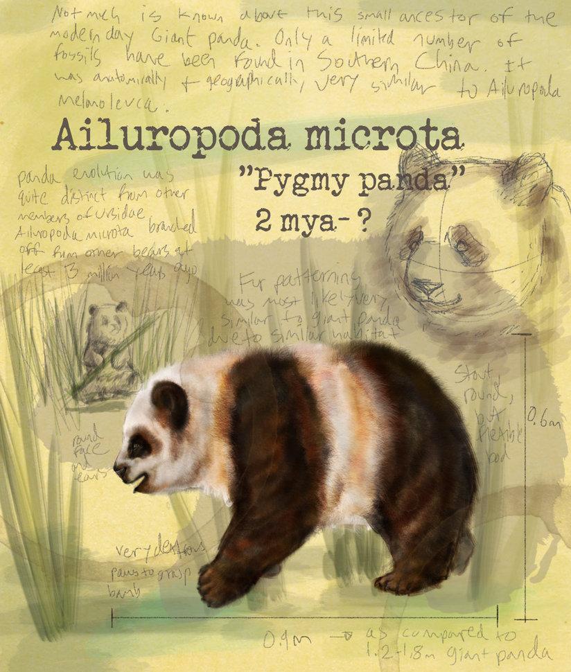 Ailuropoda microta