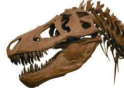Cráneo T- rex.jpg