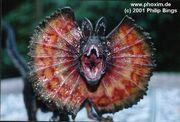 Dilophosaurus JP.jpg