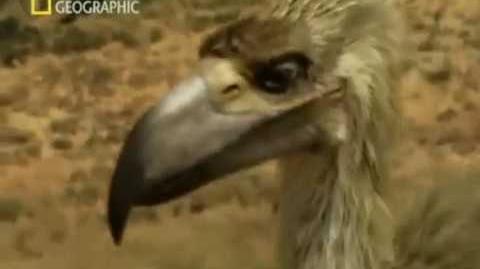 Depredadores prehistóricos (Las aves del terror)