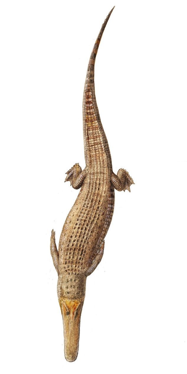 Aegyptosuchus