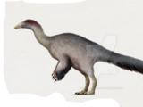 Paraxenisaurus