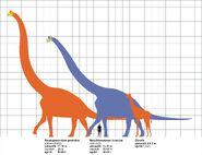 Sauroposeidon and Brachiosaurus size