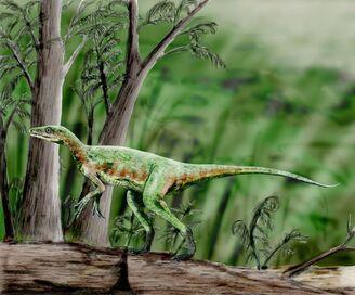 Eoraptor NT.jpg