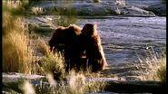 Caminando Con Cavernícolas - 02 - Hermanos De Sangre - BBC (2003)
