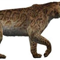 Smilodon Wiki Prehistórico Fandom