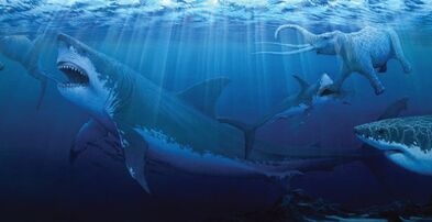 Sharks-megalodon-giant.jpg