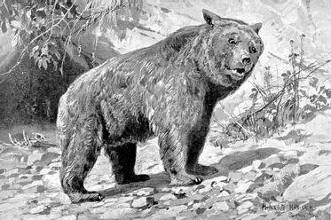Etruscan bear Ursus etruscus.jpg