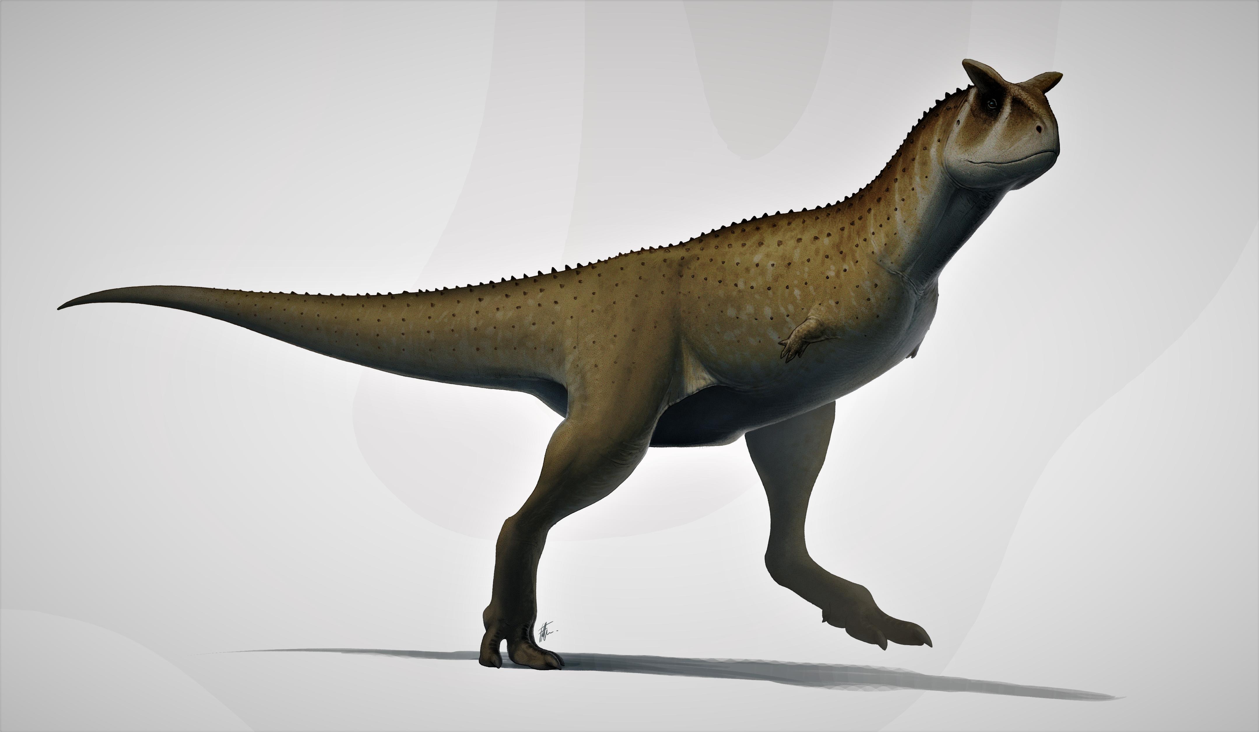 Carnotaurus Wiki Prehistorico Fandom Los investigadores también piensan que se le puede atribuir el título de eslabón perdido entre los dinosaurios herbívoros y los terópodos. carnotaurus wiki prehistorico fandom