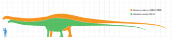 Diplodocus scale.png
