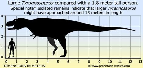 Tyrannosaurus-size.jpg