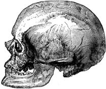 Cro-Magnon-male-skull.png