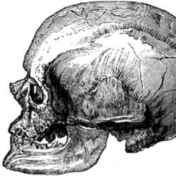 Homo cromagnon