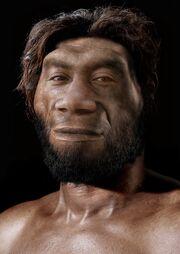 Homo erectus pekinensis.jpg