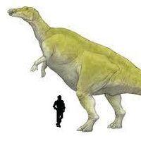 Ornithischia Wiki Prehistorico Fandom Hay mucho escrito sobre ello. ornithischia wiki prehistorico fandom
