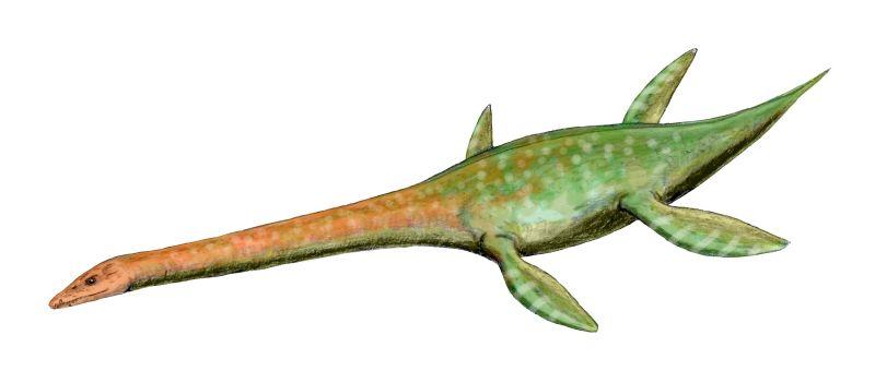 Attenborosaurus