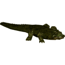 Alligator prenasalis