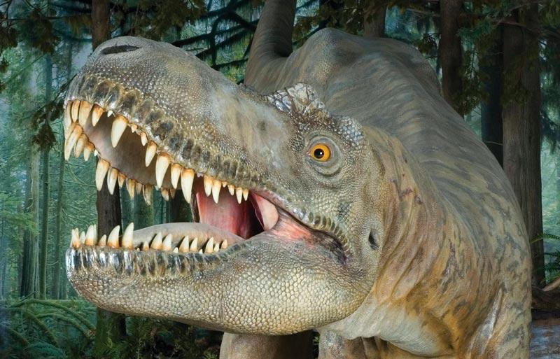 Albertosaurinae