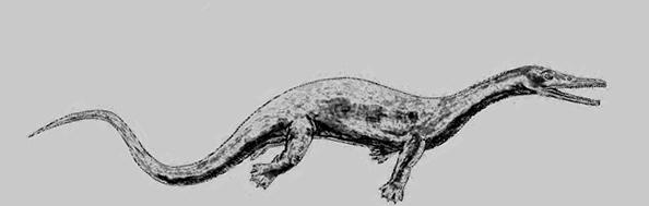 Anshunsaurus
