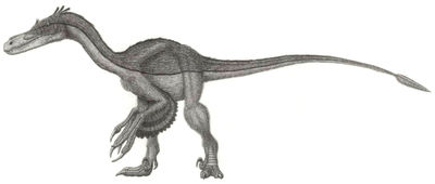 Airakoraptor
