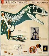 170px-Fossils 4.JPG