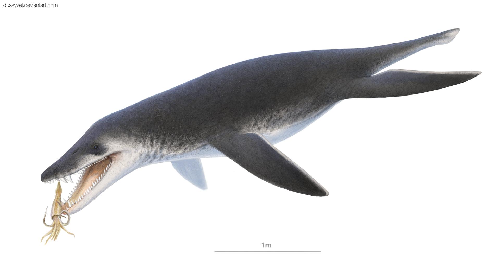Acostasaurus