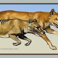 Thylacinus Wiki Prehistórico Fandom