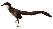 Pneumatoraptor