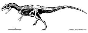 Allosaurus skeleton.jpg