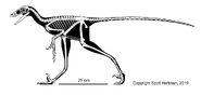 Hesperornithoides+skeletal