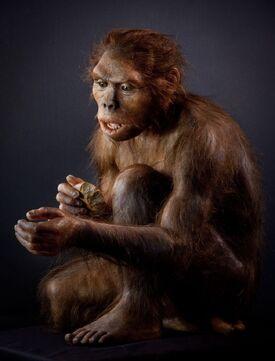 Homo habilis model.jpg