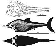 Nannopterygius2