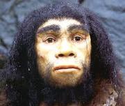 Homo heldelbergensis.png