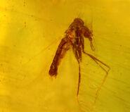 Lutzomyia adiketis