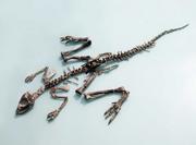 Jeholosaurus skeleton.png