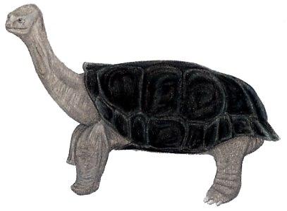 Реюньонская гигантская черепаха