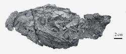 Демонозавр череп - копия