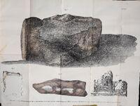 Базилозавр кости 2