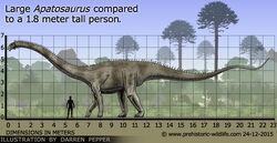 Apatosaurus-size.jpg