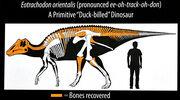 Eotrachodon skeleton.jpg
