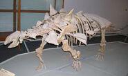 Gastonia-skelet-1-m
