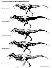 Tyrannosaurus mass.jpg