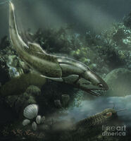 Coccosteus-of-the-devonian-period-jan-sovak