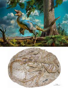 Daliansaurus liaoningensis-novataxa 2017-Shen-Lü-Liu-Kundrát-Brusatte-et-Gao paleoArt-Zhao Chuang.jpg