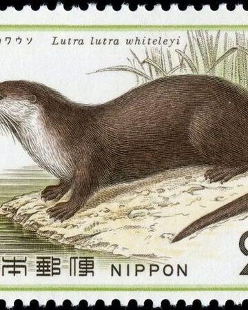 Японская речная выдра.jpg